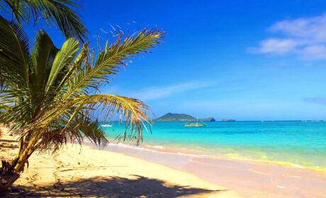 Alicja Kuberska, Wyspy szczęśliwe